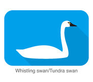 Whistling swan, cartoon flat icon, vector illustration Royalty Free Stock Photography