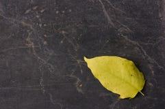 Whit do pavimento uma folha só do outono fotografia de stock royalty free