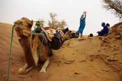 whit för kamelökenflickor Fotografering för Bildbyråer
