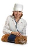 whit för kattkvinnligveterinär royaltyfri fotografi
