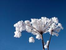 whit för 2 glaserad växter Royaltyfri Bild