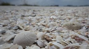 Whit gebrochene Oberteile auf dem Strand Lizenzfreie Stockbilder