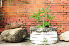 Whit plant pot with old stone in front of red brick wall. Royalty Free Stock Photo