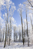 Whit winter in the forrest Stock Image