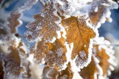 Whit zima w forrest Zdjęcia Stock
