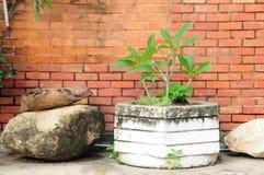 Whitblumentopf mit altem Stein vor Wand des roten Backsteins. Lizenzfreies Stockfoto