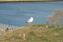 Whitby,捕鱼港口,沿海城市,北约克郡海岸线, 免版税库存图片