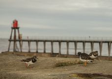 Whitby, Γιορκσάιρ, Αγγλία - πουλιά στην προκυμαία Στοκ φωτογραφία με δικαίωμα ελεύθερης χρήσης
