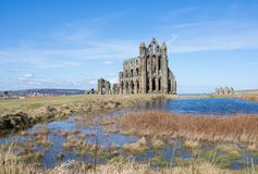 Whitby Abbey forntida kloster i Whitby, England Arkivfoto