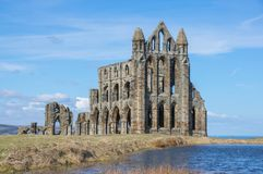 Whitby Abbey forntida kloster i Whitby, England Arkivfoton