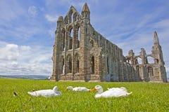 Whitby Abbey - o lugar perfeito fotos de stock royalty free