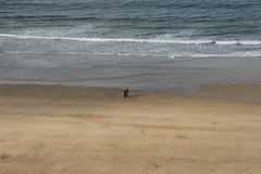 Whitby, fishing port,  coastal town, north yorkshire coastline,. Seaside resort Stock Photo