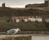 Whitby - jour sombre par la mer et une mouette image libre de droits