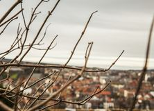 Whitby, Yorkshire, England - a view through some twigs. The image shows a view of Whitby, a small town in Yorkshire, England - through some twigs. It was taken Royalty Free Stock Images