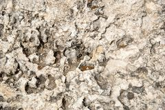 White abstract grungy  background from a rocky surface Royalty Free Stock Photos