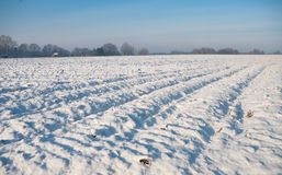 White acre Stock Images