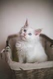 White adorable kitten sitting in a wicker basket Stock Photo