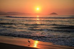 White aigrette at sunrise on the beautiful coast of the Chacahua National Park, Oaxaca, Mexico royalty free stock image