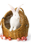 White albino rabbit in basket Royalty Free Stock Photos