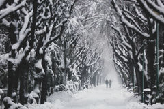 White alley in the park Stock Photography