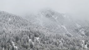 The white alpine forests in the snow Stock Image