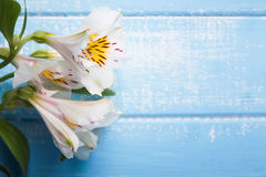 White alstroemeria flowers Royalty Free Stock Image