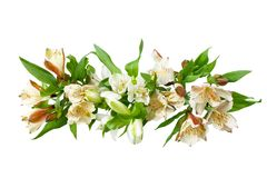 White alstroemeria flowers branch on white background isolated close up stock image