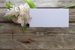White alstroemeria Royalty Free Stock Images