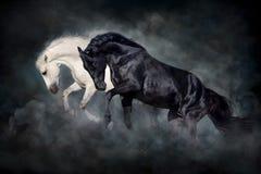 Free White And Black Stallion Run And Play Stock Photos - 178958543