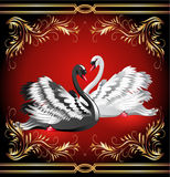 White And Black Swan On Red Background Stock Photo