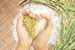 Free White And Brown Rice Held In Heart Shaped Hand Over White Rice Background. Royalty Free Stock Photography - 56868437