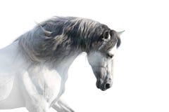 White horse hight key stock photo