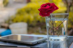 White Android Smartphone Near Clear Glass Vase With Red Rose Royalty Free Stock Photography