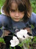 White anemone. 5 yo' boy smelling white anemone stock photo