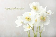 White anemone flower. Bouquet white anemone flower on neutral background. Concept mother`s day. Copy space stock photos