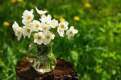 White anemones in glass jar on old stump in meadow copyspace Stock Images