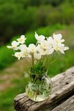 White anemones in glass jar on old wooden bench Stock Photography