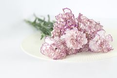 White angel. Beautiful pink flowers on white desk. royalty free stock photo