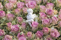 White angel on pink rose blossoms Stock Image