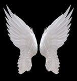 White angel wing. Isolated on black Stock Photo