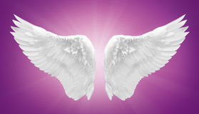 White angel wing isolated. On purple Royalty Free Stock Photos