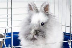 White angora bunny Stock Image