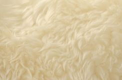White animal wool texture background. Beige tint natural wool. Close-up texture of plush fluffy fur.  royalty free stock image