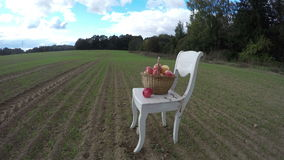 White antique wooden chair on farm field in autumn and full apples basket. Timelapse 4K stock footage