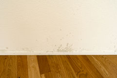 White apartment wall with toxic mold and mildew Stock Images