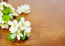 White apple flower on wooden surface Stock Image