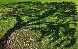White apple tree petal, tree shade Stock Image