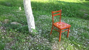 White apple tree petals falling in spring on  orange chair, slow motion stock video footage