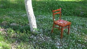 White apple tree petals falling in spring on red  wooden chair in garden stock video footage