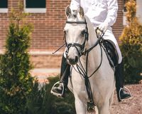 White arabian dressage horse and rider in white uniform at show jumping competition. Equestrian sport background. Royalty Free Stock Photos
